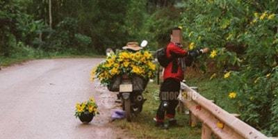 Nam phượt thủ hái sạch hoa ven đường