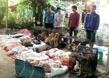 Bắt giữ bọn trộm chó ở Tây Ninh