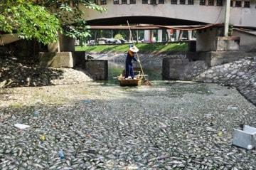 Cá chết hàng loạt tại các hồ