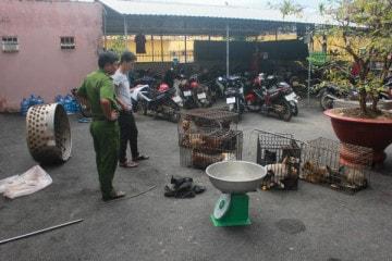 Xử lý băng nhóm trộm chó