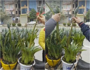 Cô gái bán hoa dởm
