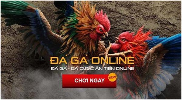 Nhà cái đá gà uy tín tại Việt Nam hiện nay 02
